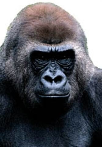 Competing against an 800-pound gorilla: Better service gives dealers an edge over Wal-mart