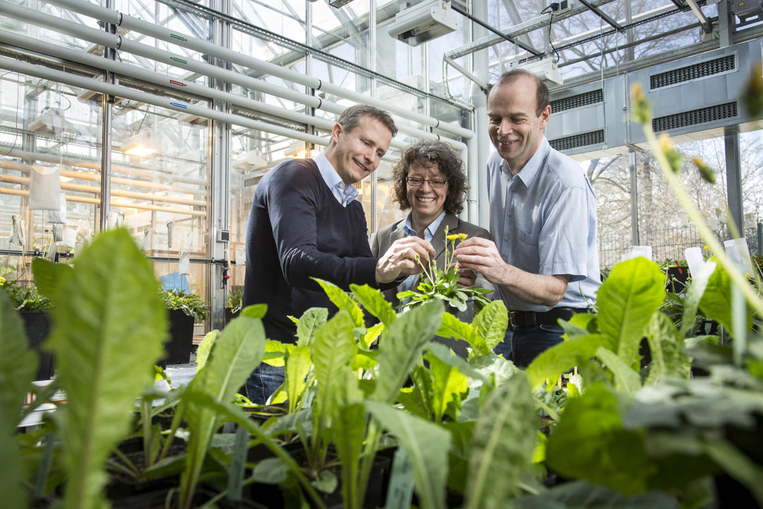 Continental's dandelion research earns prize