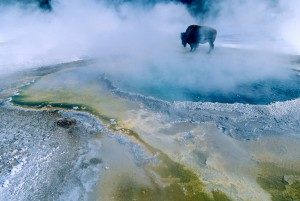 Michelin partners with Yellowstone Foundation